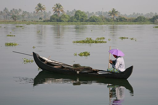 A man on a boat in a backwater, Coconut trees and bushes can be seen at the background. THe man wears a lavender coloured umbrella-hat.